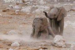Ελέφαντες μωρών που παίζουν στο ρύπο στοκ φωτογραφίες