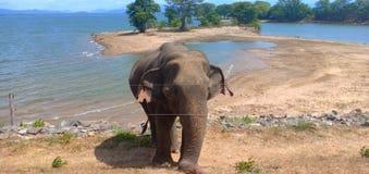 ελέφαντες πάρκων της Σρι Λάνκα udawalawe εθνικοί στοκ φωτογραφία με δικαίωμα ελεύθερης χρήσης
