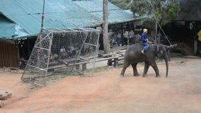 Ελέφαντες που παίζουν το ποδόσφαιρο φιλμ μικρού μήκους