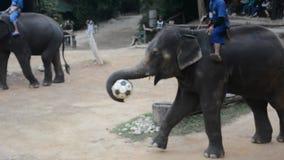Ελέφαντες που παίζουν το ποδόσφαιρο απόθεμα βίντεο