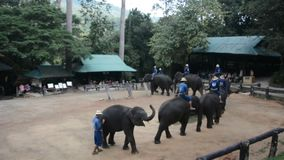 Ελέφαντες σε ένα πάρκο φιλμ μικρού μήκους