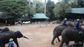 Ελέφαντες σε ένα πάρκο απόθεμα βίντεο