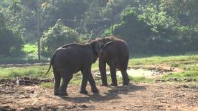 Ελέφαντες στο εθνικό πάρκο Udawalawe φιλμ μικρού μήκους