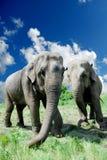 ελέφαντες στοκ εικόνα με δικαίωμα ελεύθερης χρήσης