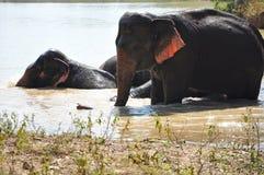 ελέφαντες Στοκ φωτογραφία με δικαίωμα ελεύθερης χρήσης