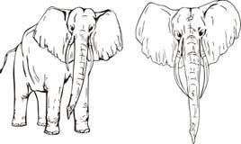 ελέφαντες ελεύθερη απεικόνιση δικαιώματος