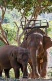 ελέφαντες στοκ εικόνα