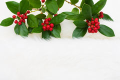 ελαιόπρινος μούρων Στοκ φωτογραφία με δικαίωμα ελεύθερης χρήσης