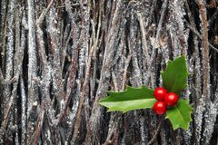 Ελαιόπρινος Χριστουγέννων στο σωρό των κλάδων Στοκ Εικόνες
