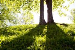 ελαφριά δέντρα δύο πρωινού Στοκ εικόνα με δικαίωμα ελεύθερης χρήσης