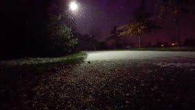 Ελαφριά πτώση χιονιού στο πάρκο τη νύχτα απόθεμα βίντεο