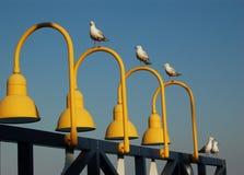 ελαφριά seagulls συναρμολογήσεων Στοκ Εικόνες