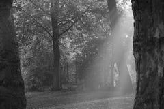 ελαφριές ακτίνες Στοκ εικόνες με δικαίωμα ελεύθερης χρήσης
