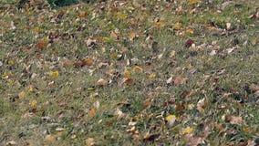 Ελαφριές κινήσεις αερακιού που τινάζουν την πράσινη χλόη με τα φύλλα στο πάρκο απόθεμα βίντεο