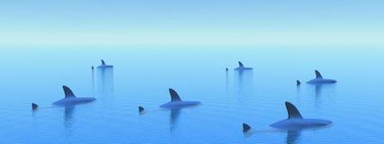 ελαφριοί καρχαρίες πρωινού ελεύθερη απεικόνιση δικαιώματος