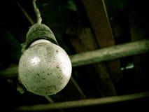 ελαφρύς παλαιός βολβών Στοκ φωτογραφία με δικαίωμα ελεύθερης χρήσης