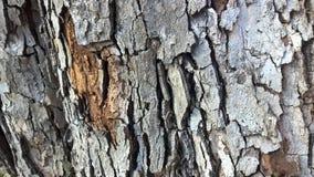 ελαφρύ δάσος σύστασης Στοκ εικόνες με δικαίωμα ελεύθερης χρήσης
