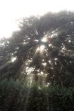 ελαφρύ δέντρο Στοκ εικόνα με δικαίωμα ελεύθερης χρήσης
