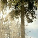 Ελαφρύ χιόνι που πέφτει από το δέντρο στοκ εικόνες
