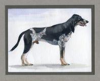 Ελβετός, κυνηγόσκυλο Λουκέρνης που χρωματίζεται στο watercolor στο σχεδιάγραμμα στοκ εικόνα με δικαίωμα ελεύθερης χρήσης
