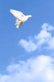 ελευθερία πτήσης Στοκ Φωτογραφία
