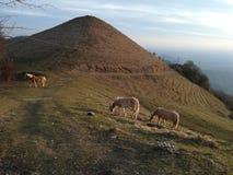 Ελεύθερα άλογα στα βουνά στοκ φωτογραφίες με δικαίωμα ελεύθερης χρήσης