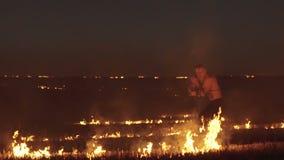 Ελεύθερη κατάρτιση μαχητών με το ξίφος στον καίγοντας τομέα νύχτας αργά φιλμ μικρού μήκους