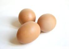 ελεύθερη σειρά αυγών Στοκ Εικόνα