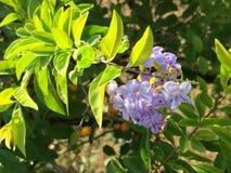 Ελκυστική δέσμη των λουλουδιών σε έναν κλάδο στοκ εικόνα