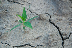 ελπίδα ξηρασίας Στοκ Εικόνες