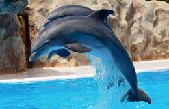 δελφίνια Στοκ Εικόνα