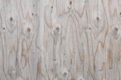 δεμένο δάσος Στοκ εικόνα με δικαίωμα ελεύθερης χρήσης