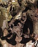 δεμένο δέντρο Στοκ Εικόνες