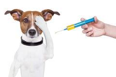 Εμβολιασμός σκυλιών Στοκ φωτογραφία με δικαίωμα ελεύθερης χρήσης