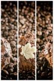 Εμβλήματα καφέ Στοκ Φωτογραφίες