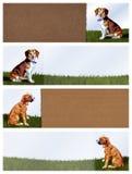 Εμβλήματα σκυλιών Στοκ Φωτογραφίες