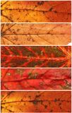 Εμβλήματα φύλλων φθινοπώρου Στοκ Εικόνες