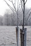 Εμπλεγμένα δέντρα στοκ εικόνες