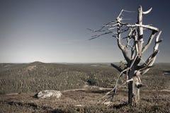 εμπλοκή Στοκ εικόνες με δικαίωμα ελεύθερης χρήσης