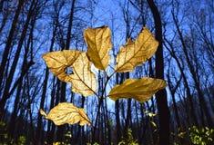 Εμπνευσμένα φύλλα και φως του ήλιου Στοκ φωτογραφία με δικαίωμα ελεύθερης χρήσης