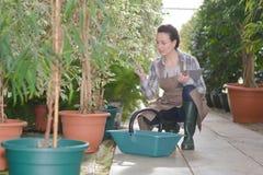 Εμπνευσμένος νέος κηπουρός γυναικών στο θερμοκήπιο στοκ φωτογραφία