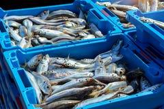 Εμπορευματοκιβώτια με τις λιχουδιές Blanes ψαριών θάλασσας σύλληψης στοκ εικόνα με δικαίωμα ελεύθερης χρήσης