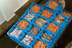 Εμπορευματοκιβώτια με τις λιχουδιές Blanes ψαριών θάλασσας σύλληψης στοκ φωτογραφίες