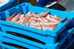 Εμπορευματοκιβώτια με τις λιχουδιές Blanes ψαριών θάλασσας σύλληψης στοκ φωτογραφία