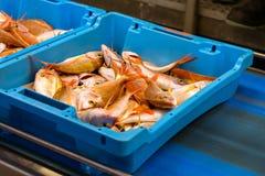 Εμπορευματοκιβώτια με τις λιχουδιές Blanes ψαριών θάλασσας σύλληψης στοκ φωτογραφία με δικαίωμα ελεύθερης χρήσης