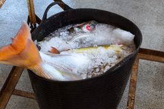 Εμπορευματοκιβώτια με τις λιχουδιές Blanes ψαριών θάλασσας σύλληψης στοκ εικόνες