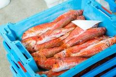 Εμπορευματοκιβώτια με τις λιχουδιές Blanes ψαριών θάλασσας σύλληψης στοκ εικόνα