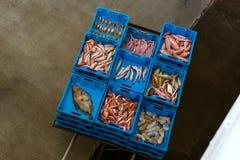 Εμπορευματοκιβώτια με τις λιχουδιές Blanes ψαριών θάλασσας σύλληψης στοκ φωτογραφίες με δικαίωμα ελεύθερης χρήσης