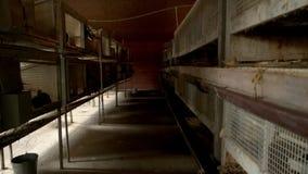 Εμπορικά κλουβιά κουνελιών στο αγρόκτημα απόθεμα βίντεο