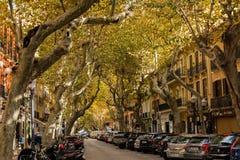 Εμπορικά οδός και αυτοκίνητα κάτω από τα δέντρα στοκ εικόνα